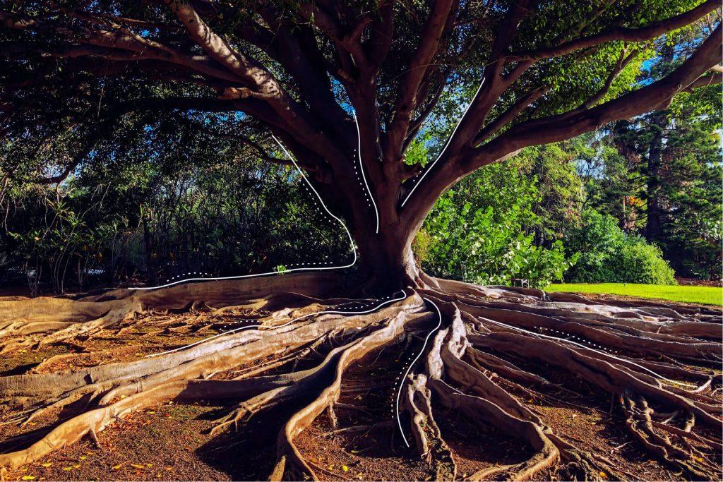 Ein stark wachsender Baum | eggheads.net