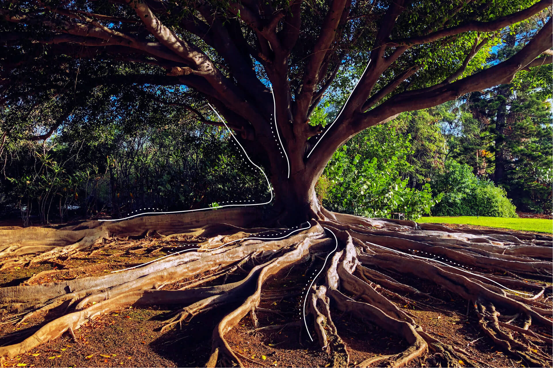 Ein stark wachsender Baum   eggheads.net